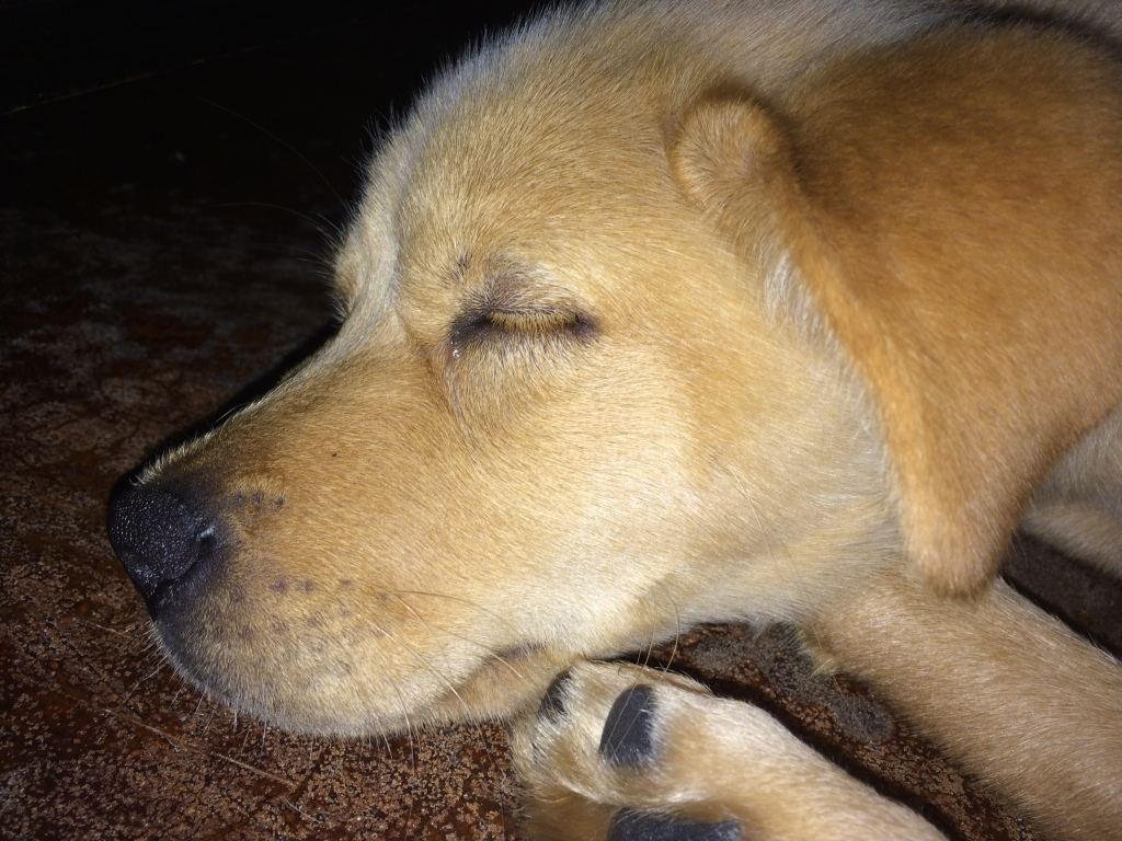 One memory I can't get rid of...Lucy the Carolina Dog. Thank you Best Friends Humane Society of Worth County!